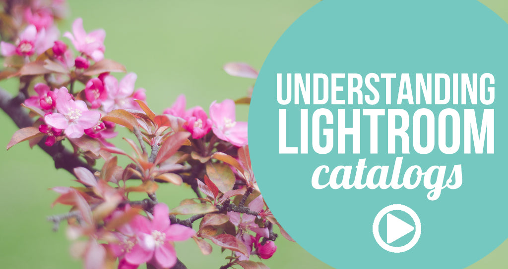 how lightroom catalogs work