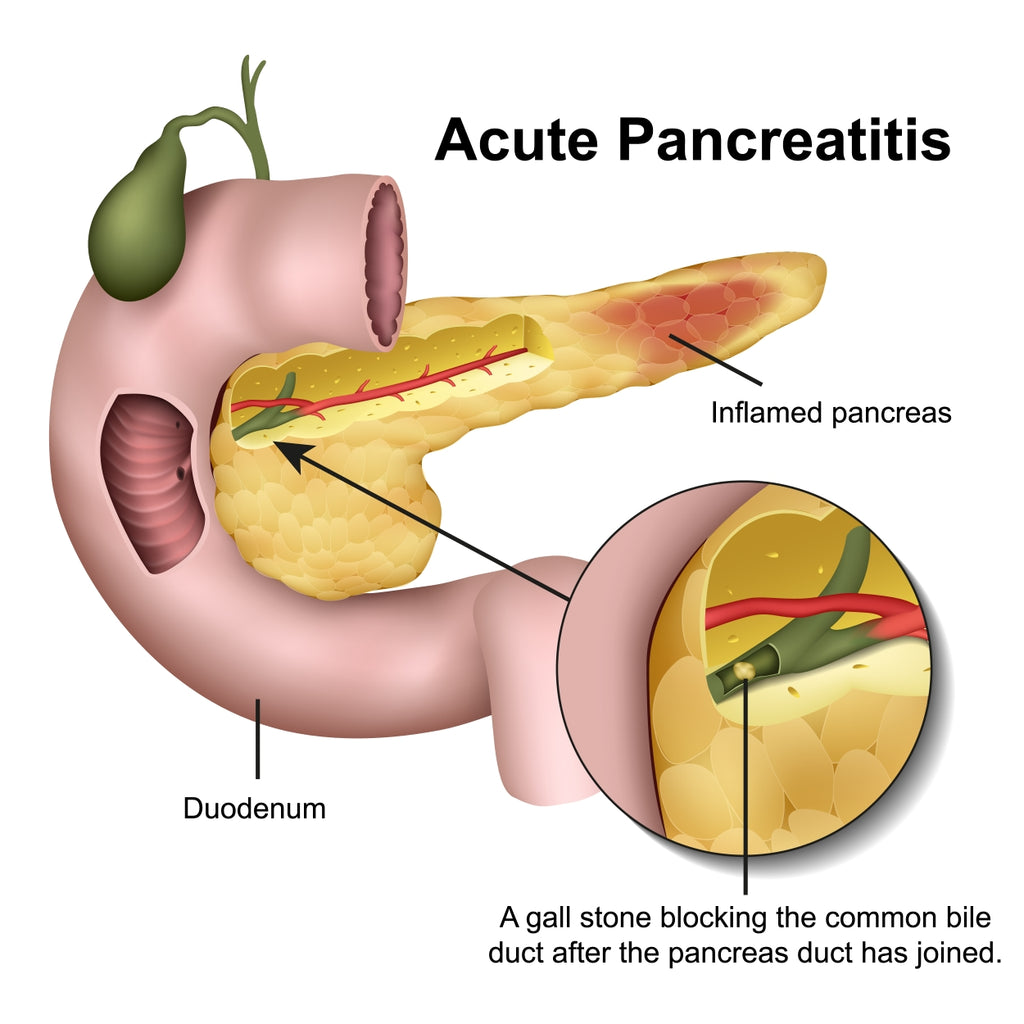 Pancreatitis in Pets