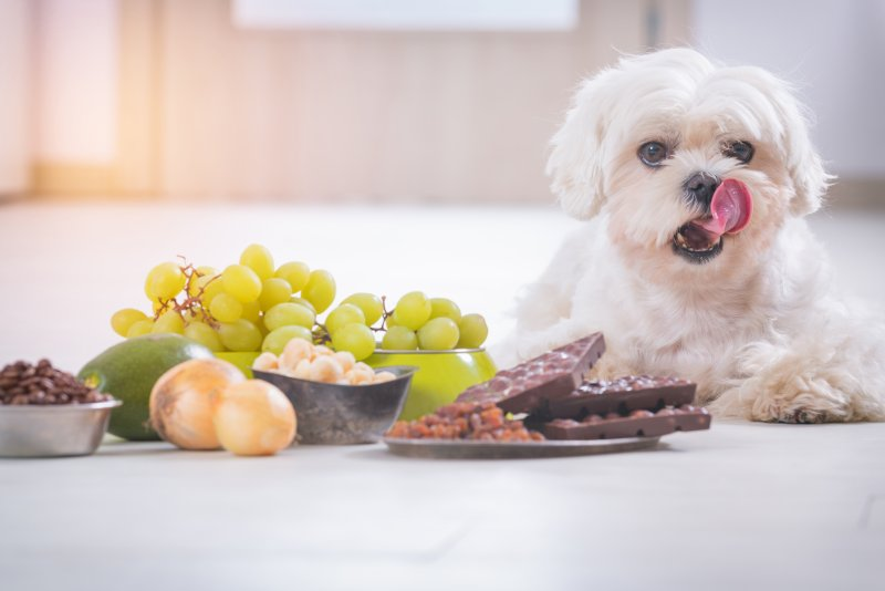 Is It Poisonous? Foods to Avoid Giving to Your Pets