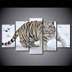 "White Tiger Snow 5 Panels Pcs Pieces wall art canvas picture print - 40"" wide : cheap canvas prints wall paintings pictures"