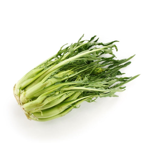 Catalogna, cicoria, puntarelle single large bunch