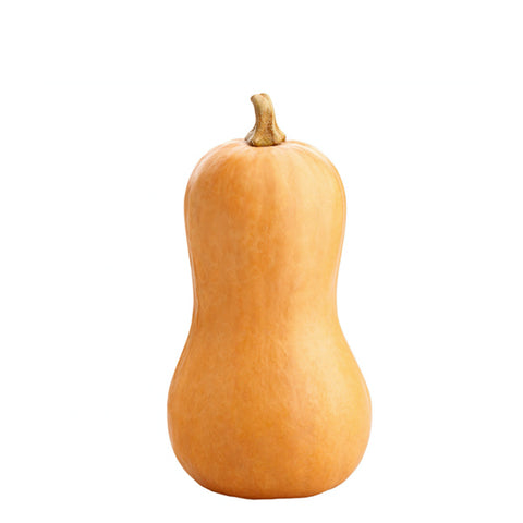 Butternut Squash, Single Piece