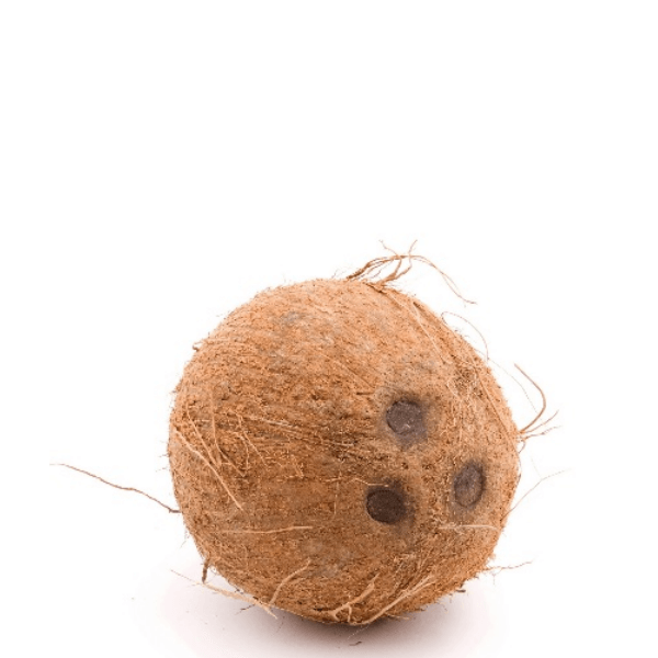 Coconut, Single Piece - Sharbatly.Club