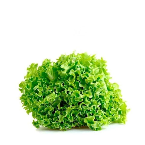 Lettuce, Lollo Biondo, single piece