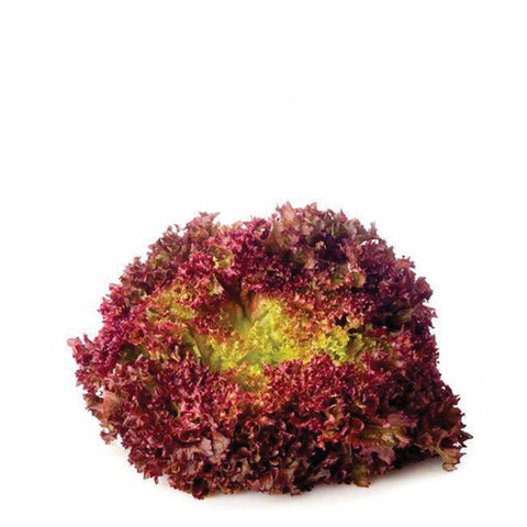 Lettuce, Lollo Rosso, single piece