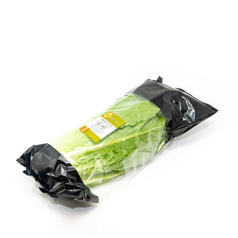 Lettuce Romaine, Cos lettuce, Spanish , single piece