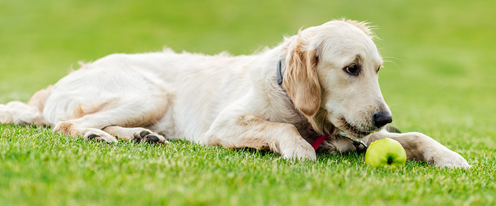 10 Summer Fruits And Vegetables That Are Safe For Your Dog