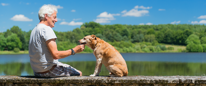 10 Tips for Caring for your Aging Dog