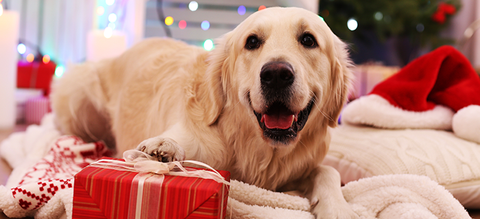Holiday Gift Guide for your Dog