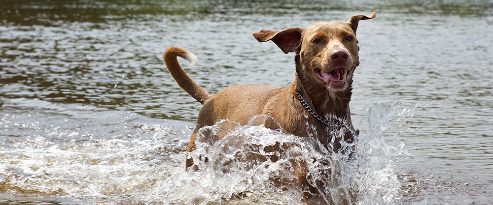 How to Keep Your Dog Cool and Comfortable in the Heat