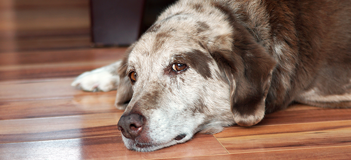 Inflammation vs. Arthritis: Which Problem Does My Dog Have and How Can I Fix It?