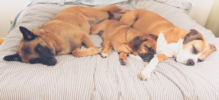 A Family of Fur: Maintaining a Multi-Dog Household
