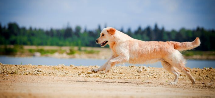 How to Extend Joint Care for Dogs