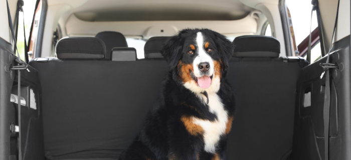 Happy Tails: 5 Tips for Taking Your Dog on a Road Trip