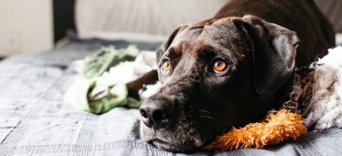 Types of Anti-Anxiety Medications for Dogs