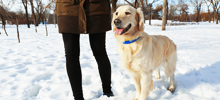 Winter Tips for your Dog