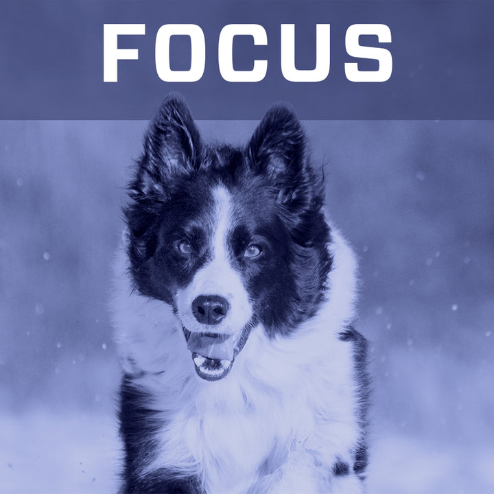 Focus Reviews