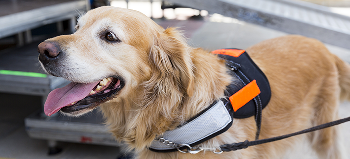 7 Rules for Interacting with Service Dogs