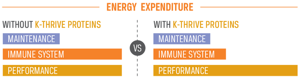 K-Thrive Energy Expenditure