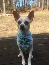 Boston Dog Bandanas™ Official Jellybean Tester