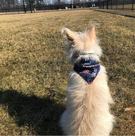 Dog Bandana - Scarf - Vintage Patriots Football - Slides through the Collar - Pet Scarf - Dog Gift