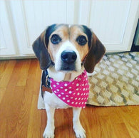 Dog Bandana - Scarf - Pink Polka Dots - Slides through the Collar - Pet Scarf - Dog Gift