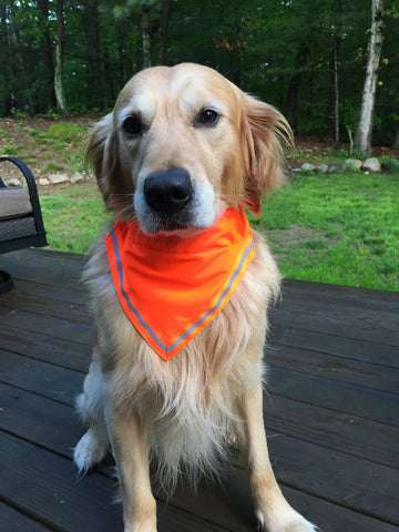 Boston Dog Bandanas™ Orange Safety Reflective Bandana