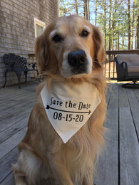 Dog Bandana Save the Date