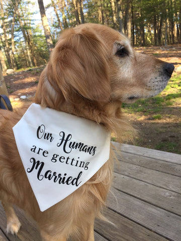 Our Humans are Getting Married Dog Bandana