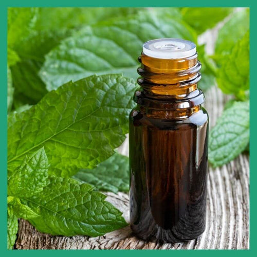 Peppermint Oil NZ