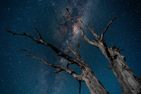Branches of the Milky Way