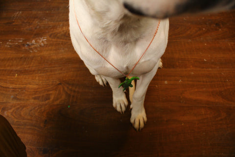 Dog Wearing Jewellery recycled plastic turtle