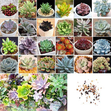 Load image into Gallery viewer, 100 Seeds of Rare Mixed Succulents