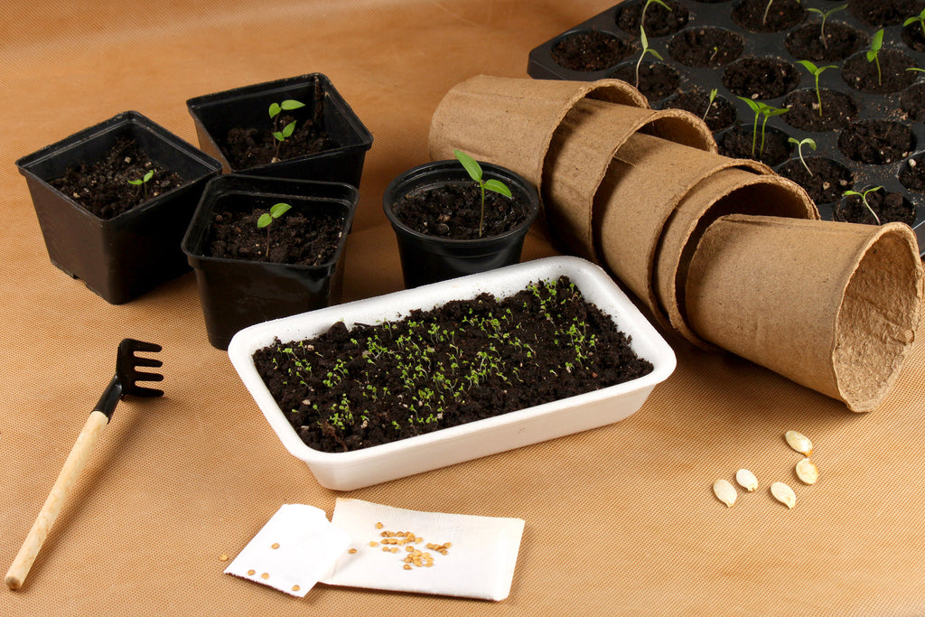 Mini Gardening Box-Get Growing!