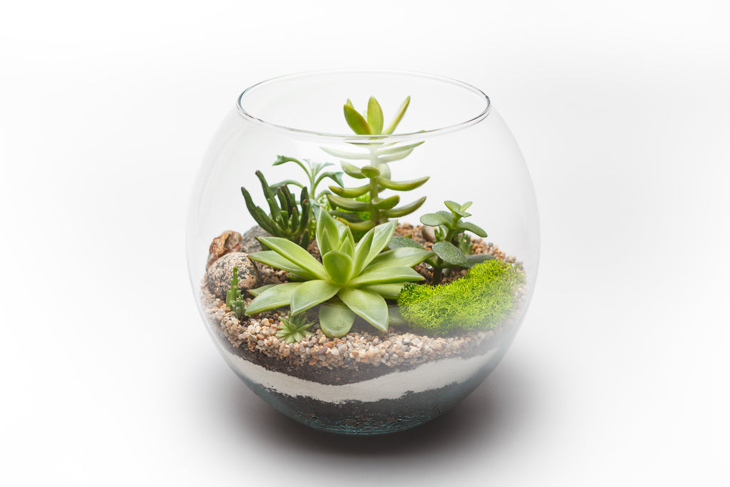 Create your own Terrarium