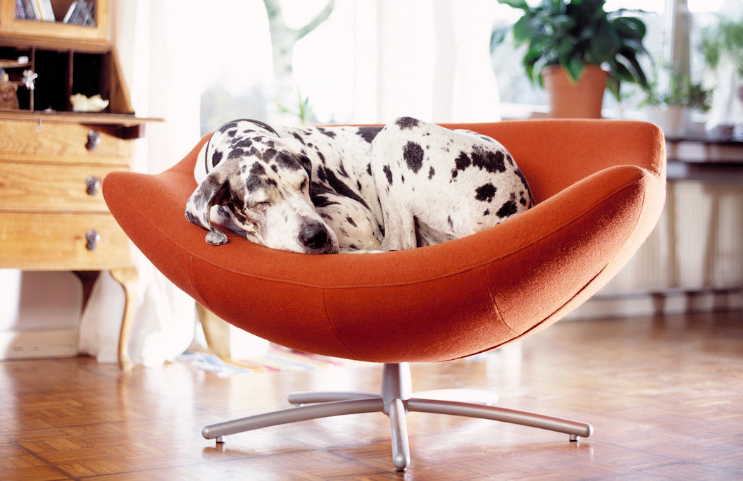 Small Spaces, Sustainable Living and Your Dog