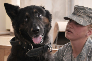 Welcome home! Military Home Comings from Pets