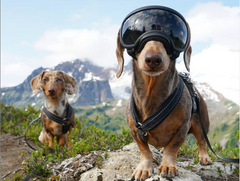 dogs that hike