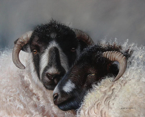 Close Companions (sheep) by Alex McGarry