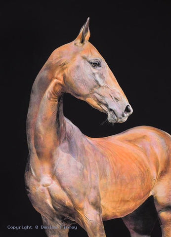 Akhal-Teke by Denise Finney *NEW*
