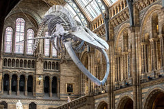 Natural History Museum indoor quiz and scavenger hunt