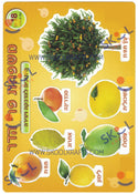 Fruit Cardstock Cutouts 18 Sheets