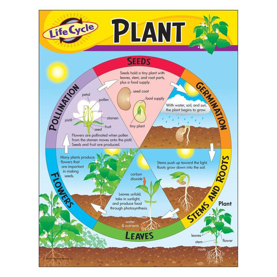 Life Cycle of a Plant Learning Chart