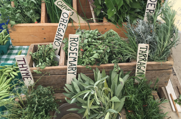 These are the Easiest Herbs to Grow at Home