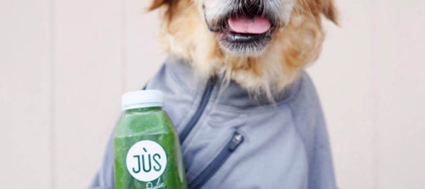 juice cleanse for dogs