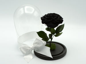 Beauty and Rose Long Stem Black
