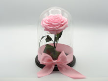 Beauty and Rose Long Stem Pink