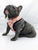 Frenchie Love Dog Health Harness - Charminique