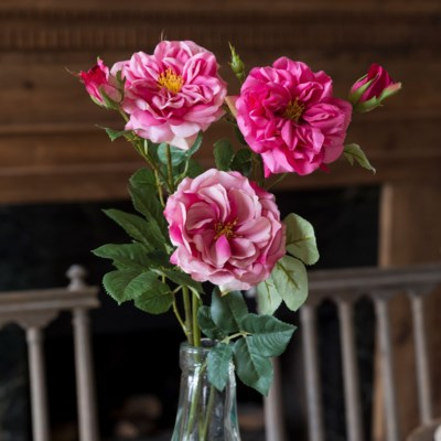 Gathered Beauty Garden Roses