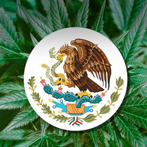 Mexico Will Soon See Legalization!